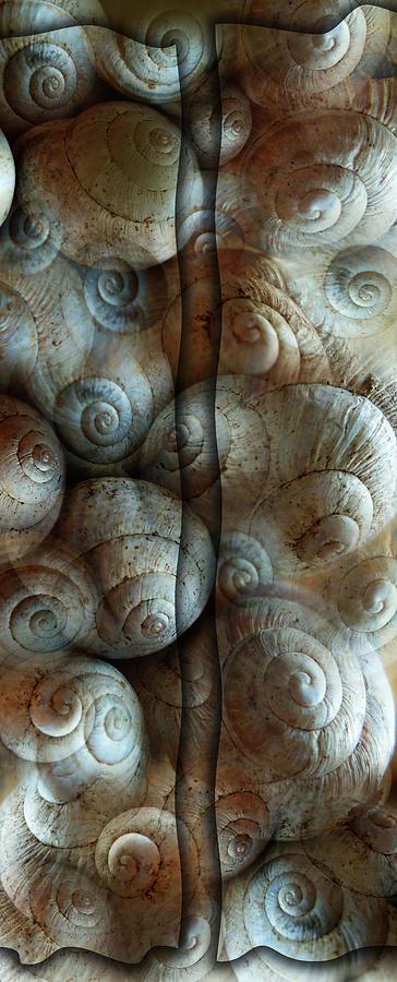 Trimmed Snails Digital Art