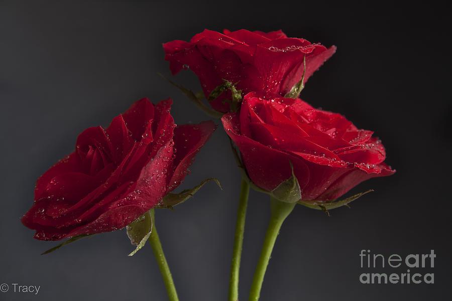 Trio Of Three Roses Photograph
