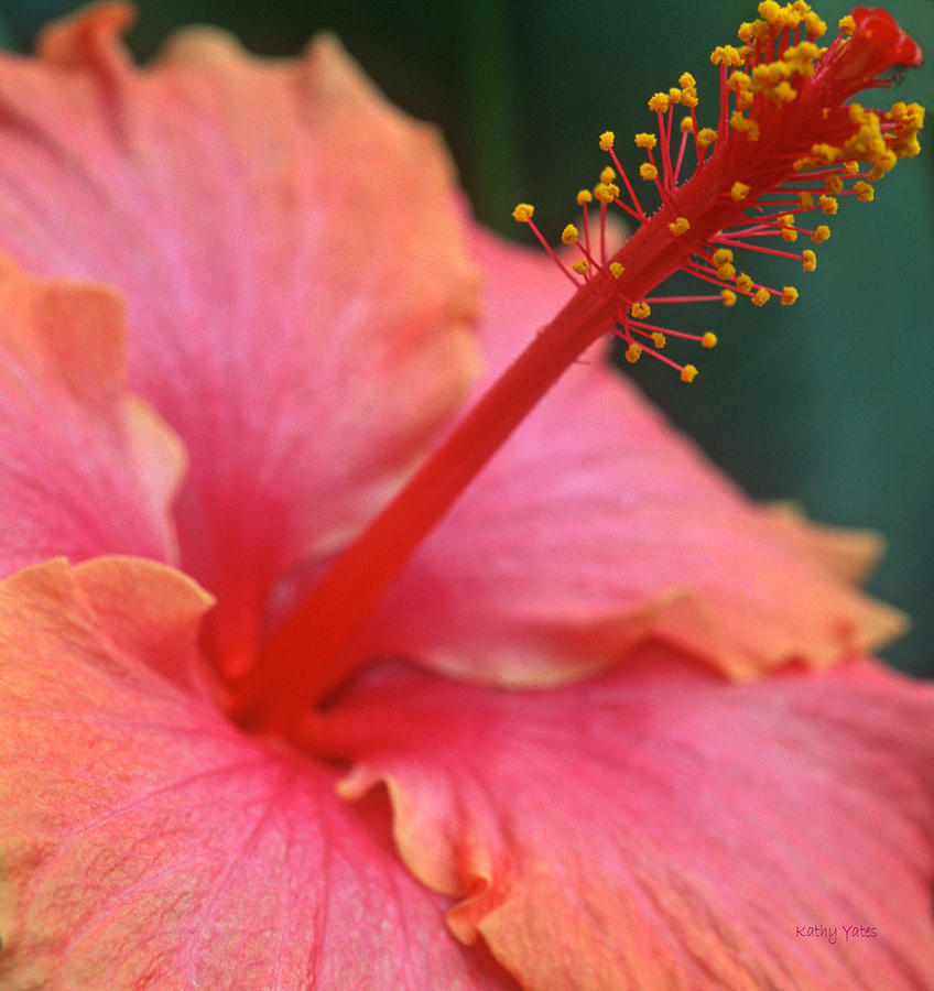 Tropical Beauty Photograph  - Tropical Beauty Fine Art Print