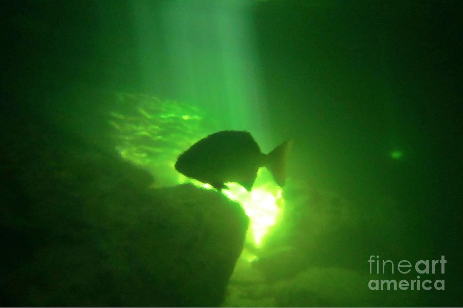 Tropical Fish Shilouette In A Cenote Photograph  - Tropical Fish Shilouette In A Cenote Fine Art Print