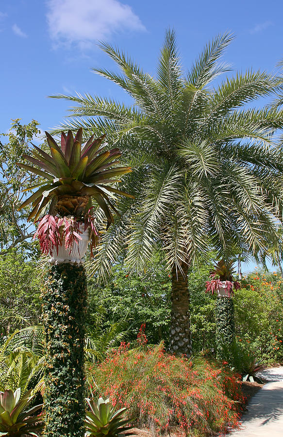 Tropical Garden Photograph