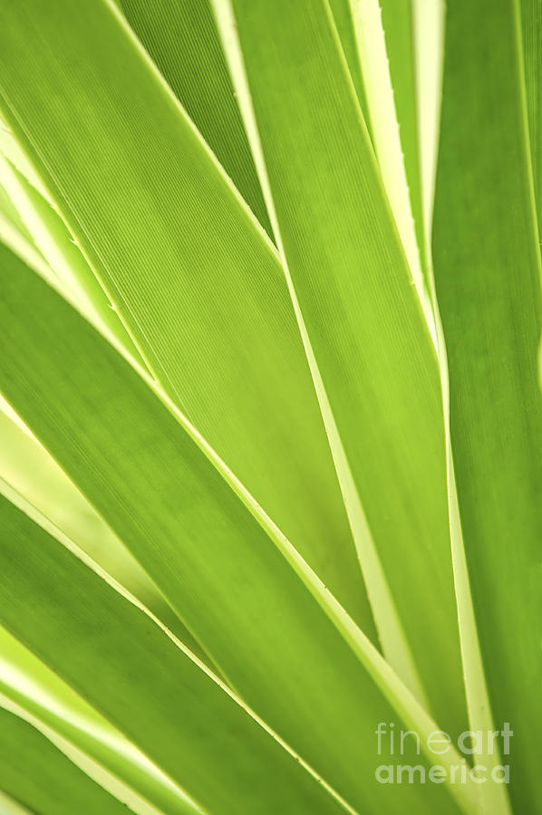 Tropical Leaves Photograph