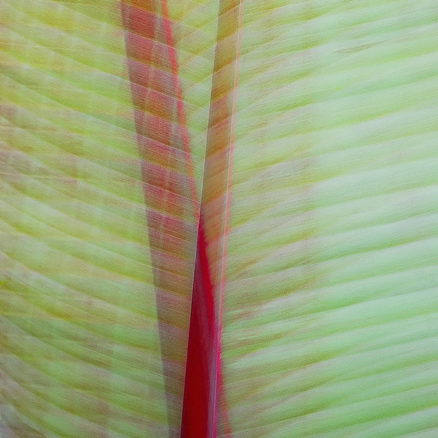 Tropical Leaves No1 2009 Photograph
