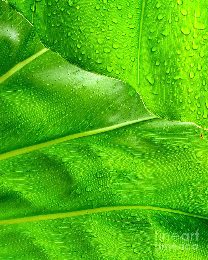 Tropical Leaves Photograph  - Tropical Leaves Fine Art Print