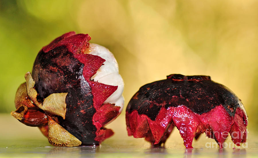 Tropical Mangosteen Photograph