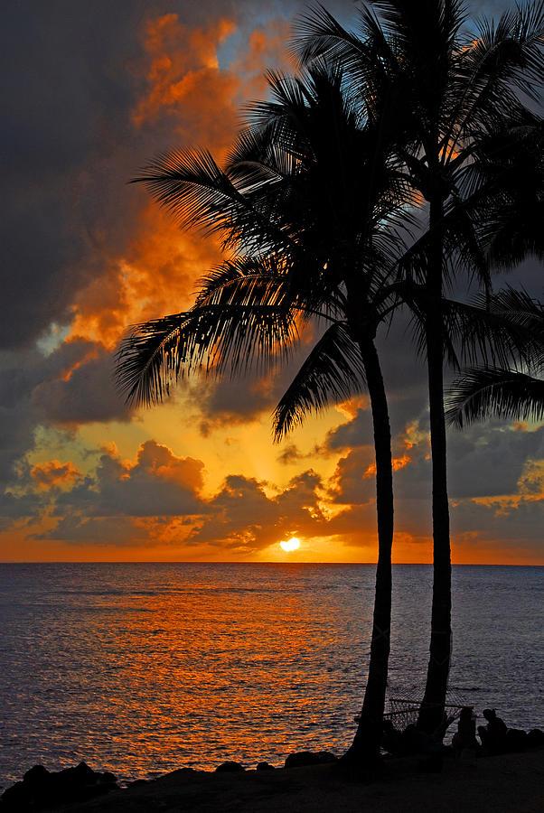 Tropical Nights  Photograph