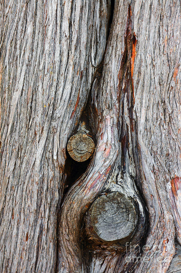 Trunk Knot Photograph  - Trunk Knot Fine Art Print