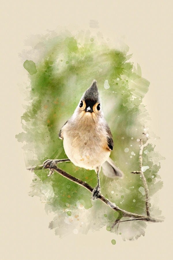 Tufted Titmouse - Watercolor Art Painting