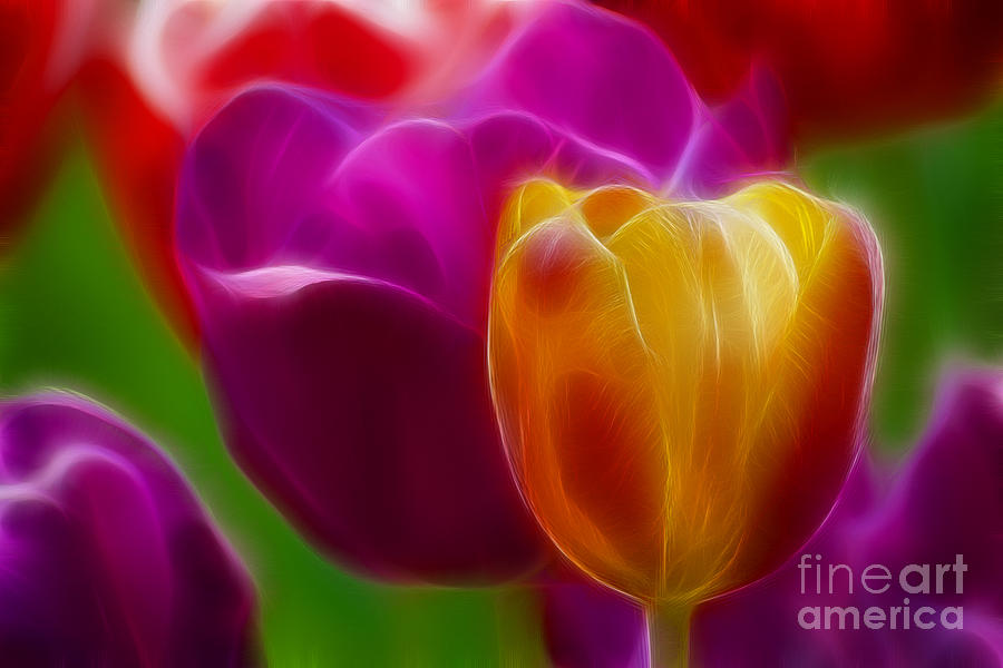 Tulip Photograph - Tulip-7011-fractal by Gary Gingrich Galleries