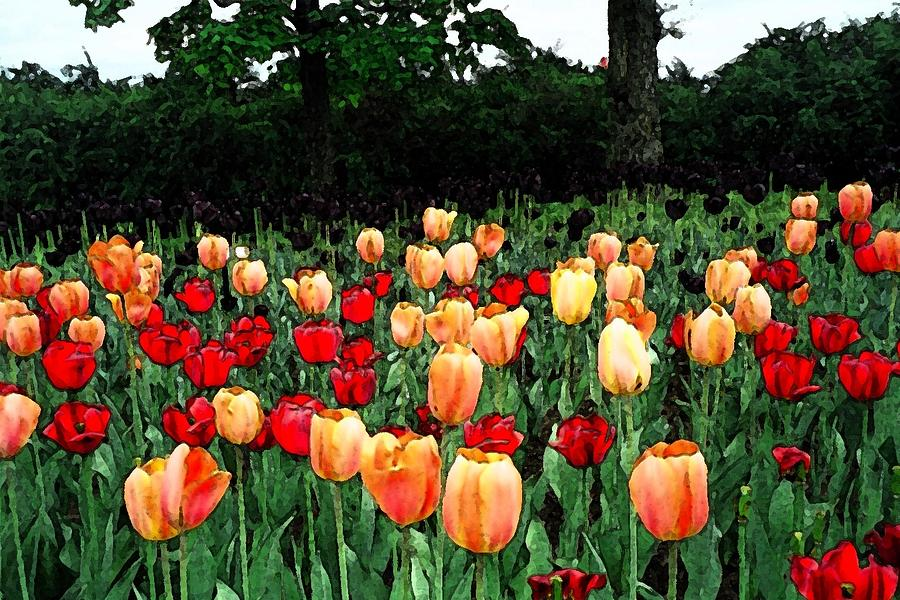 Tulips Photograph - Tulip Festival  by Zinvolle Art