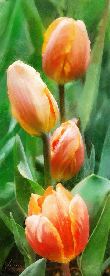 Tulip Quartet Digital Art