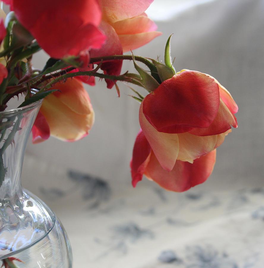 Tulip Roses Photograph