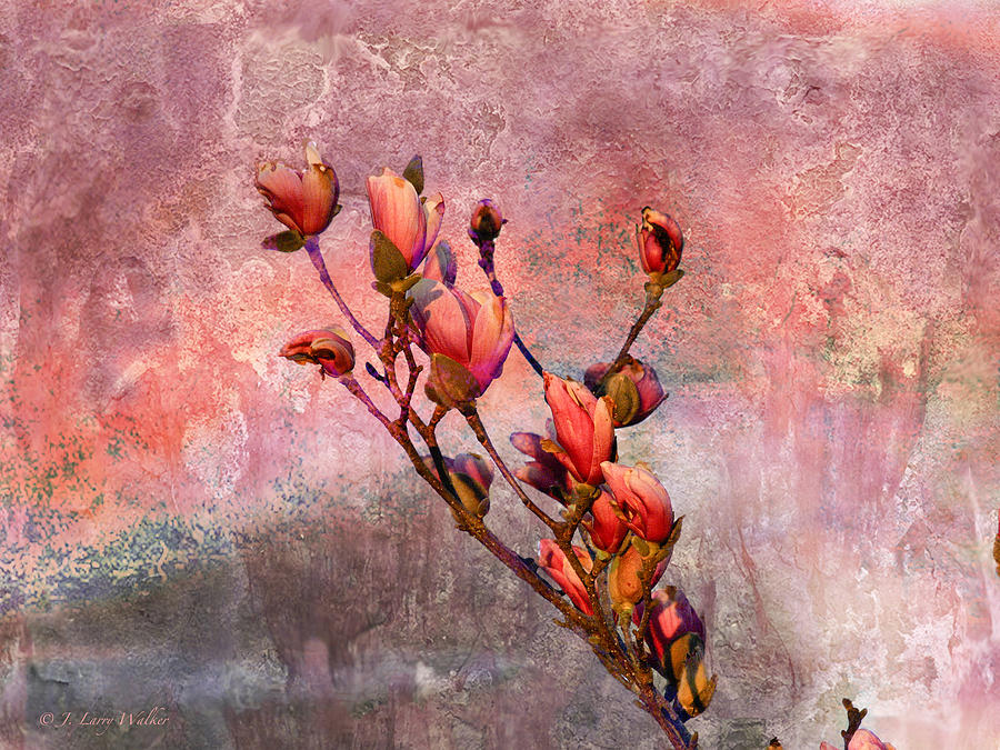 Tulip Tree Budding Digital Art  - Tulip Tree Budding Fine Art Print