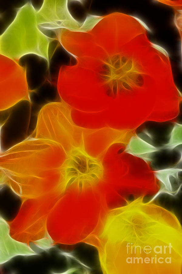 Tulip Photograph - Tulips-6681-fractal by Gary Gingrich Galleries
