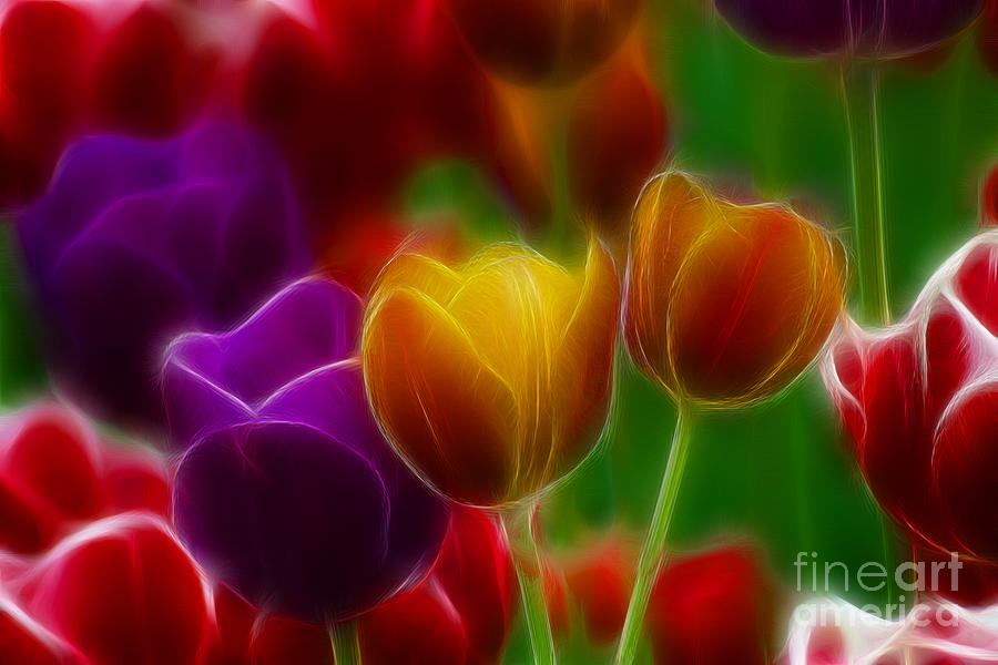Tulip Photograph - Tulips-7060-fractal by Gary Gingrich Galleries