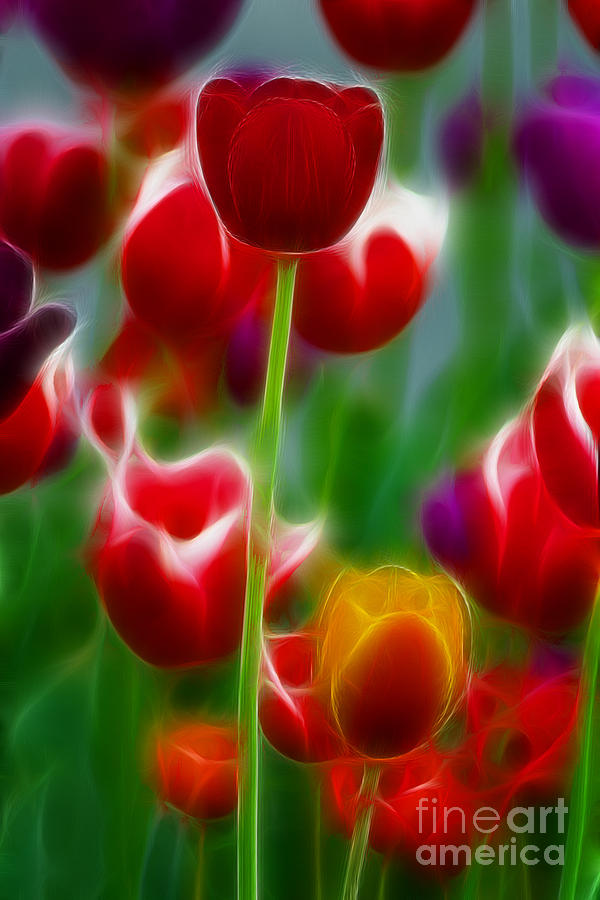 Tulip Photograph - Tulips-7069-fractal by Gary Gingrich Galleries