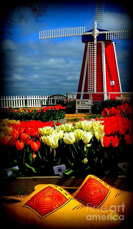 Tulips And Windmill Photograph