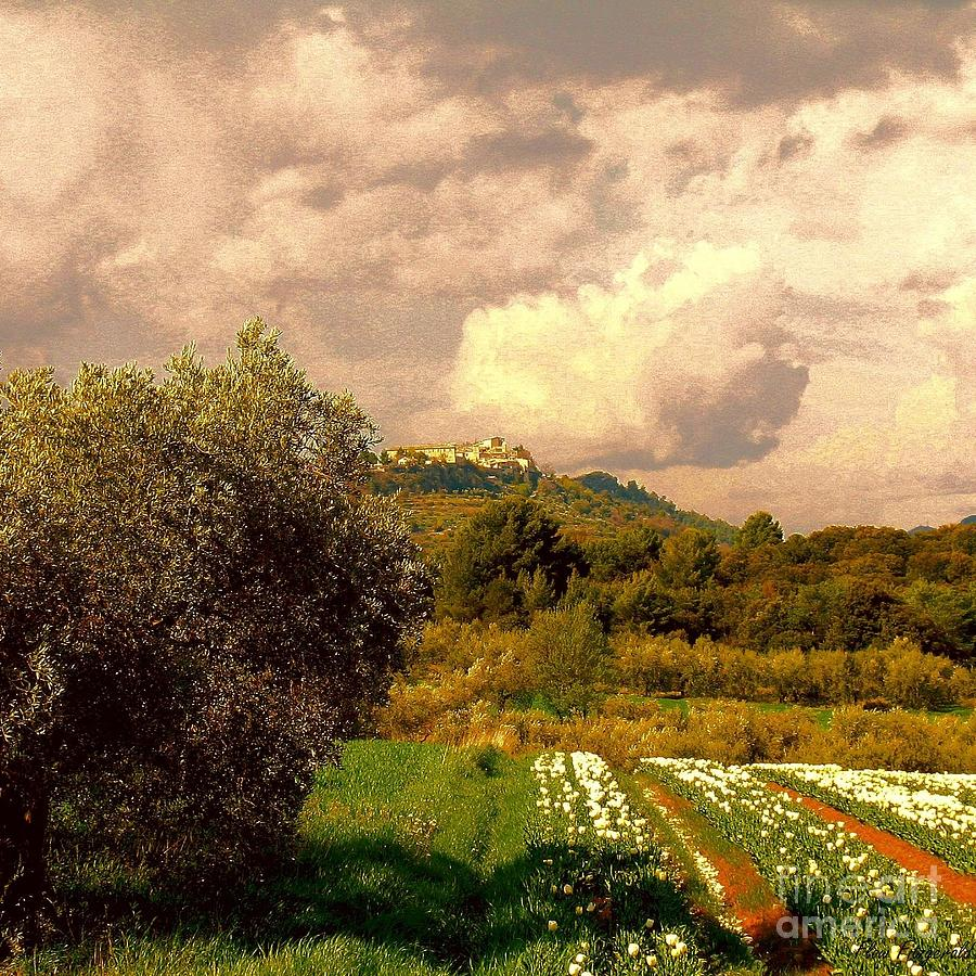 Tulips Field Photograph Photographs Photograph - Tulips Field And Lurs Village In Provence France by Flow Fitzgerald