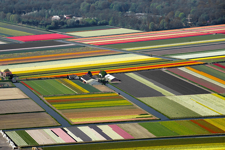 Tulips Fields, Lisse Photograph