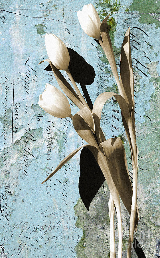Tulips On Rustic Blue Script Wall Digital Art