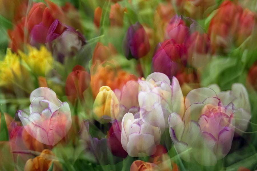 Penny Lisowski Photograph - Tulips by Penny Lisowski