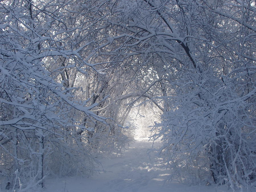 Winter Photograph - Tunnel Of Trees by Teresa Schomig