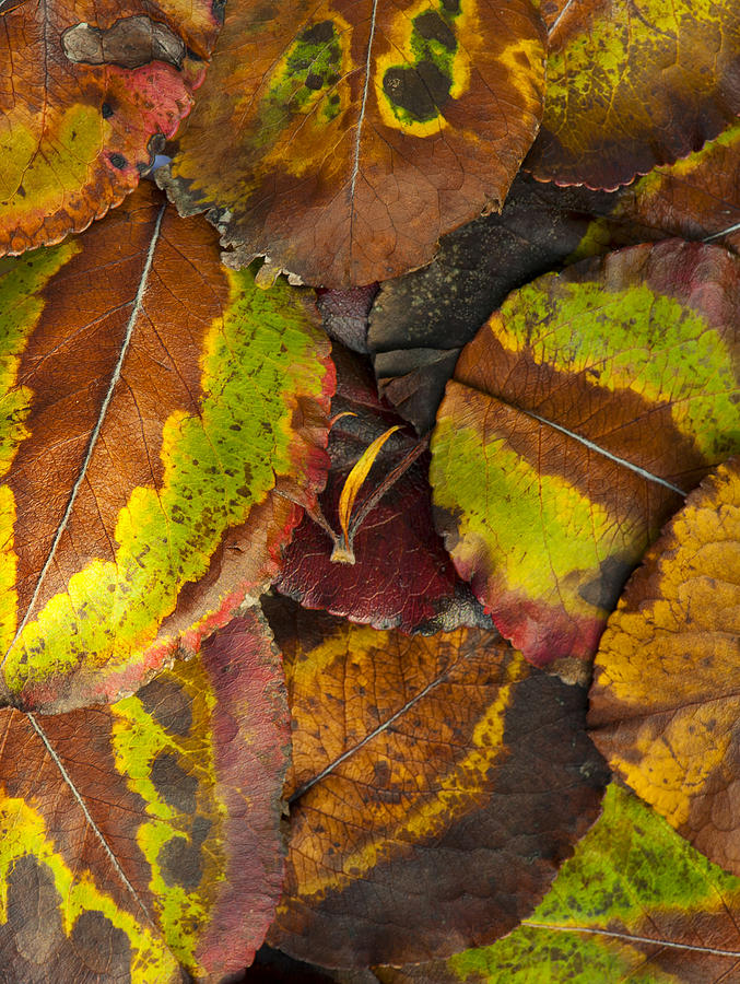 Leaf Photograph - Turning Leaves 4 by Stephen Anderson