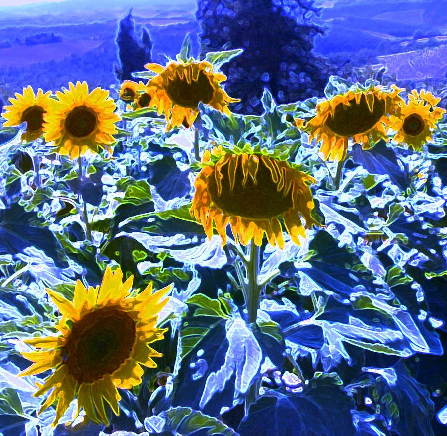 Tuscany Sunflowers Painting  - Tuscany Sunflowers Fine Art Print