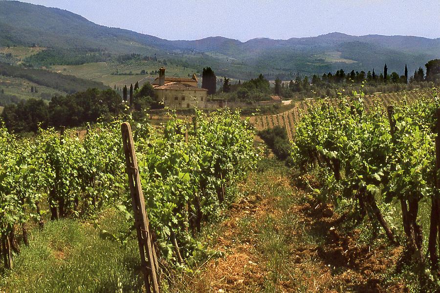 Tuscany Vineyard No.2 Photograph