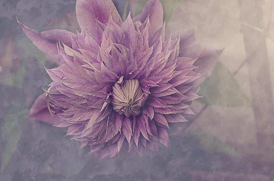 Flower Photograph - Twilight by Faith Simbeck