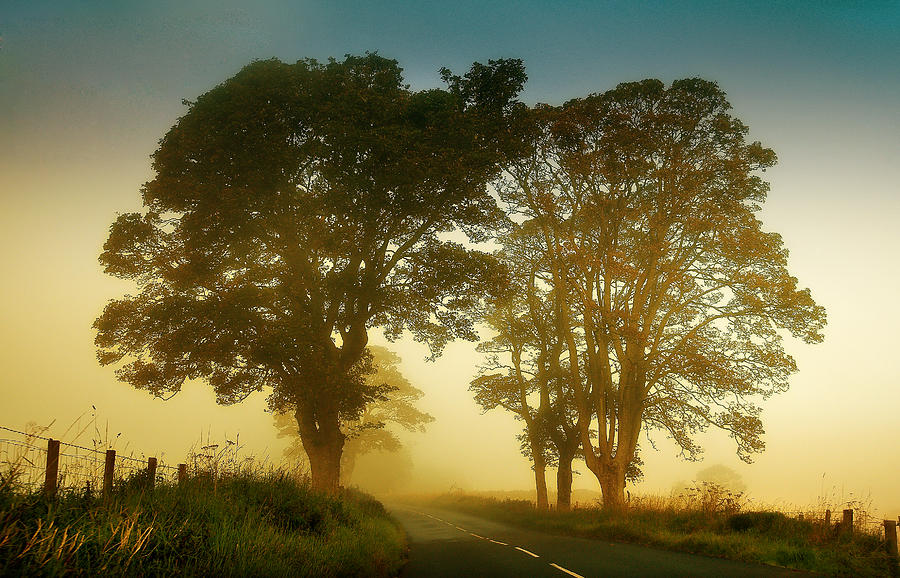 Twilight Guardians. Misty Roads Of Scotland Photograph