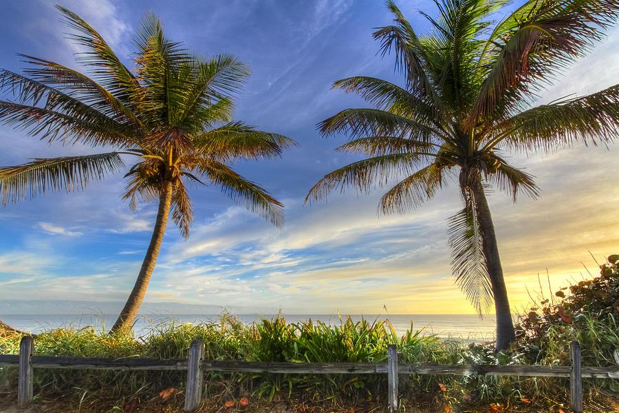 Twin Palms Photograph