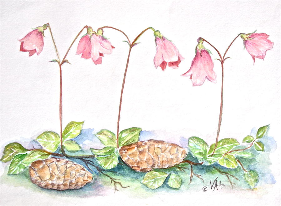 Twinflower Painting  - Twinflower Fine Art Print