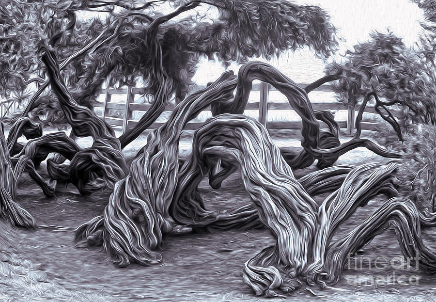 Twisted Tree - 01 Painting  - Twisted Tree - 01 Fine Art Print