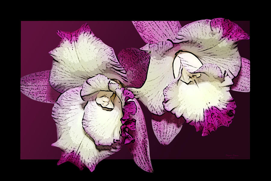 Two Baby Orchids Photograph  - Two Baby Orchids Fine Art Print