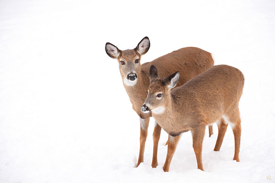 Two In The Snow Photograph  - Two In The Snow Fine Art Print
