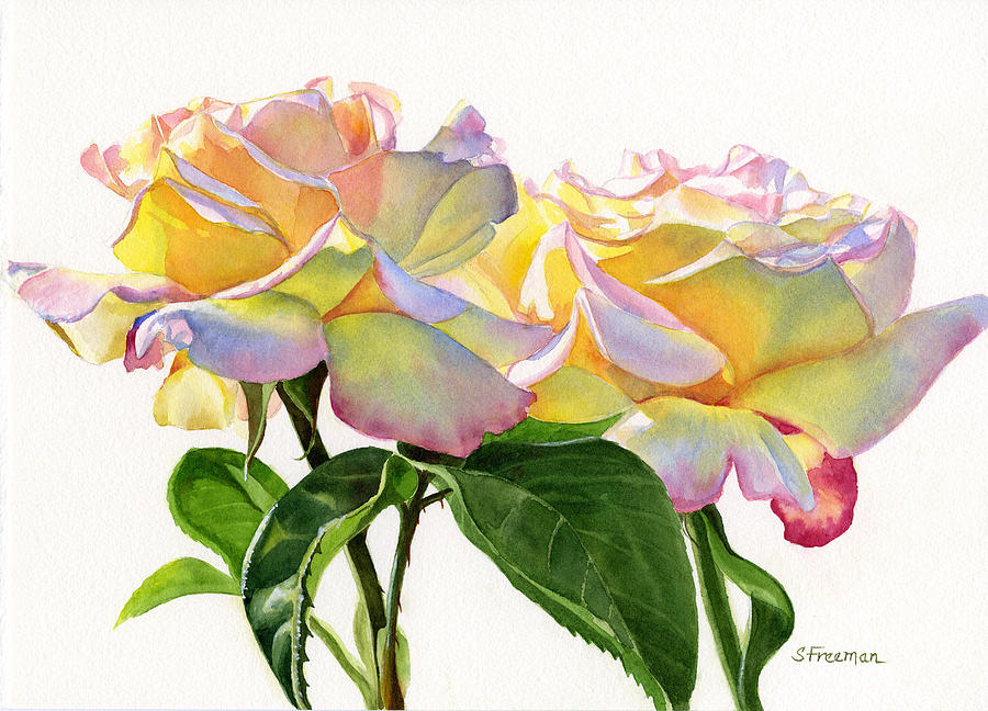 Two Peace Roses Painting  - Two Peace Roses Fine Art Print