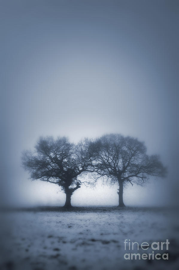 Two Trees In Blue Fog Photograph