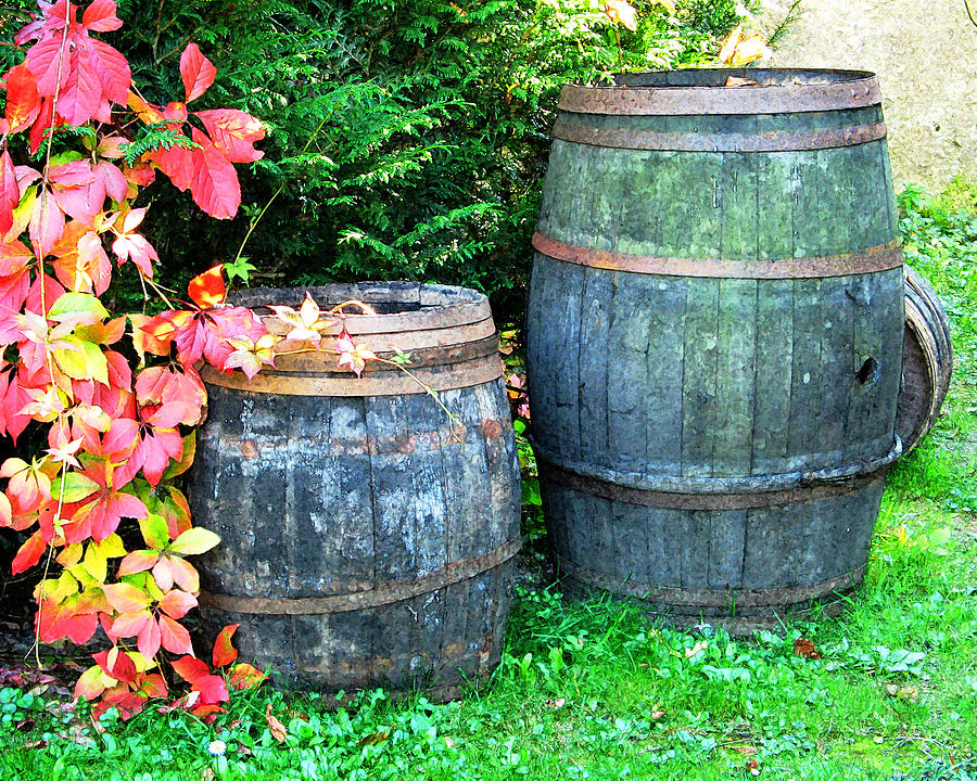 Two Wine Barrels And Red Ivy Digital Print Digital Art