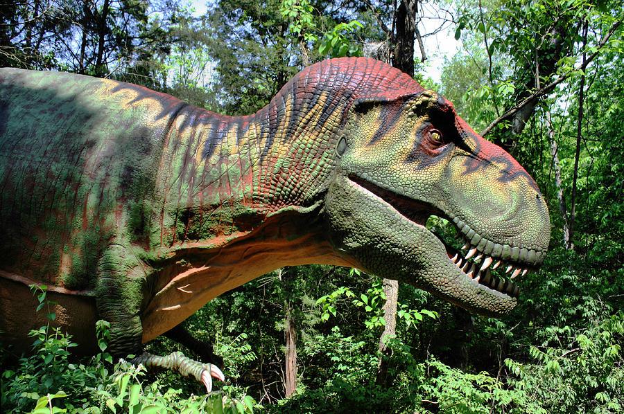 Tyrannosaurus Photograph - Tyrannosaurus Rex  T. Rex by Kristin Elmquist