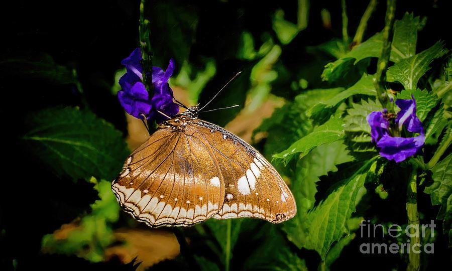 Butterfly Pavilion Photograph - UFO by Jon Burch Photography