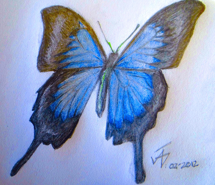 Ulysses butterfly drawing - photo#3