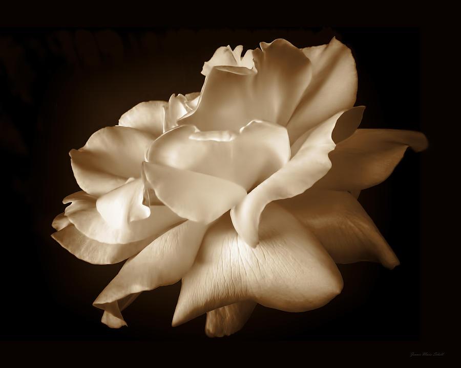 Umber Rose Floral Petals Photograph