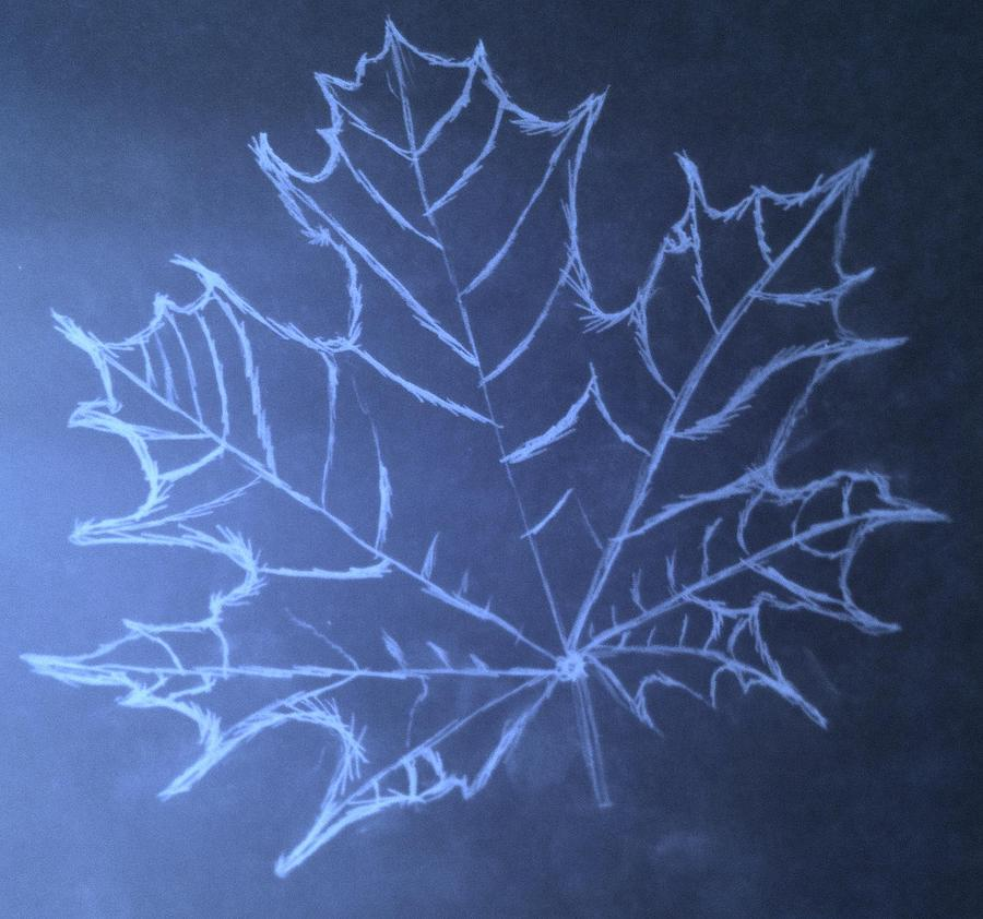 Uncertaintys Leaf Drawing  - Uncertaintys Leaf Fine Art Print