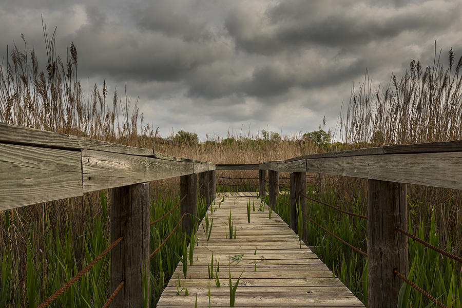 Nature Photograph - Under The Boardwalk by Jonathan Davison