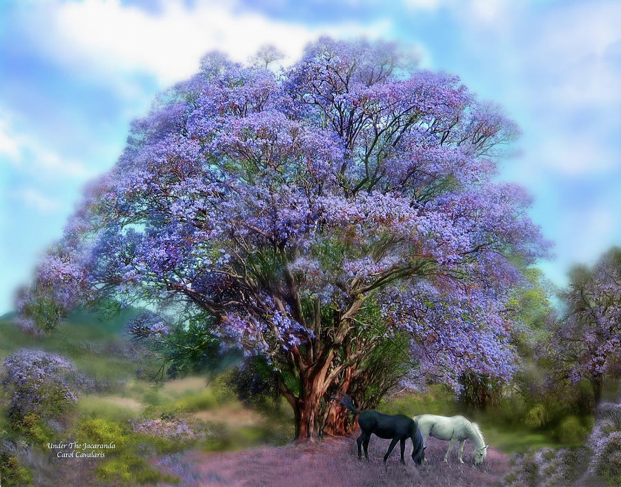 Under The Jacaranda Mixed Media