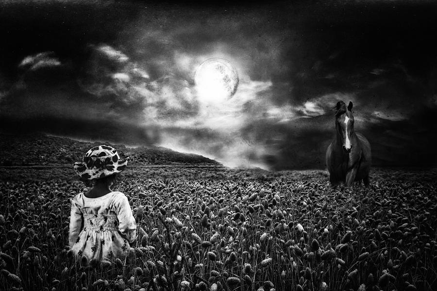 Horse Photograph - Under The Moonlight by Sabine Peters