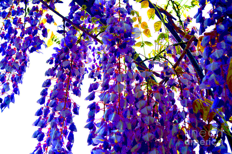Under The Wisteria Digital Art  - Under The Wisteria Fine Art Print
