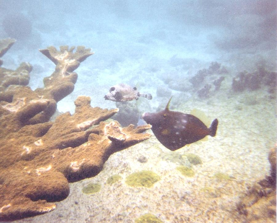 under water in Bonaire Photograph