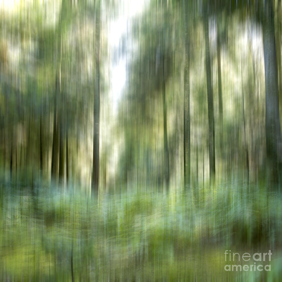 Undergrowth In Spring.  Photograph  - Undergrowth In Spring.  Fine Art Print